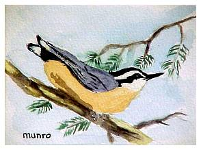 PeopleAnimalsBirds/NutHatch.jpg